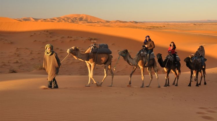 Amount For Camel Safari in Rajasthan