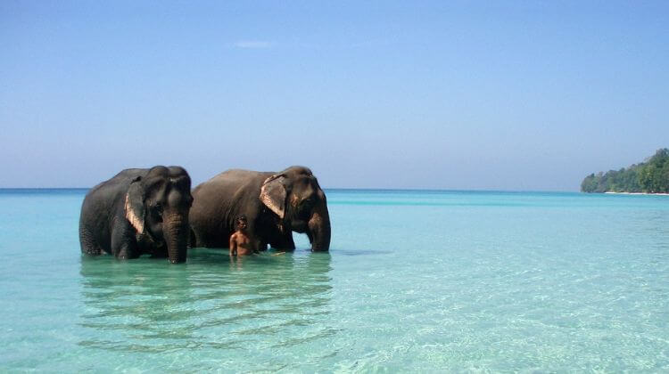 Andaman Swimming With Elephants Season