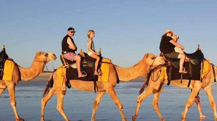 Camel Safari in Rajasthan Cost
