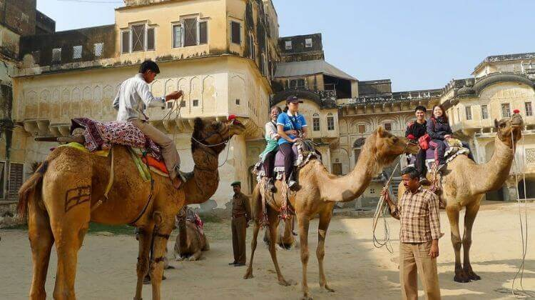 Camel Safari in Rajasthan Reviews