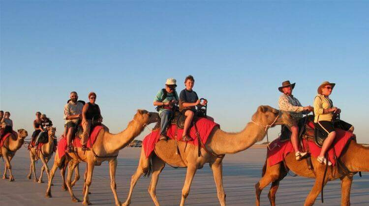 Camel Safari Rajasthan Season