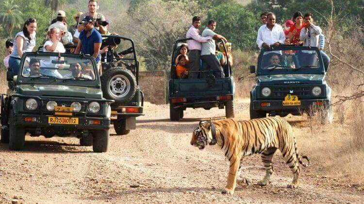 Jeep Safari & Horse Safari in Rajasthan Reviews