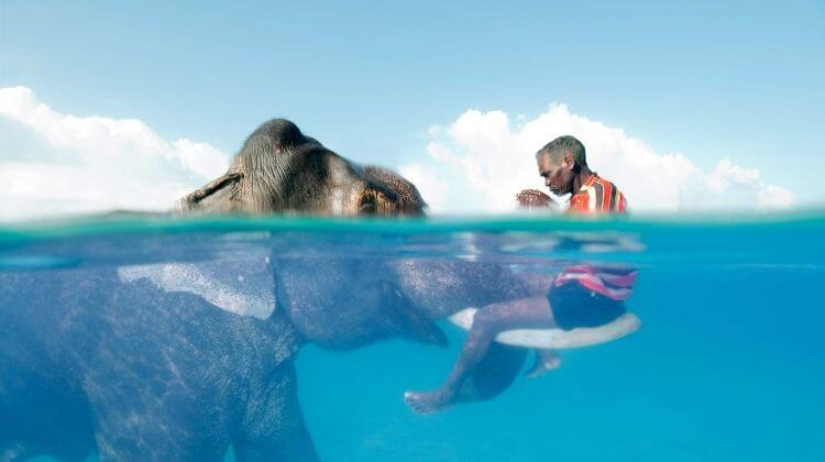 Price for Swimming With Elephants in Andaman