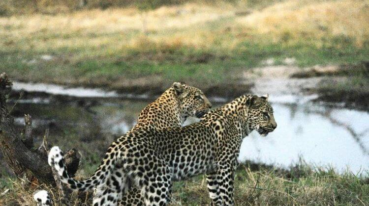 Rajasthan Cycling Tour With Leopard