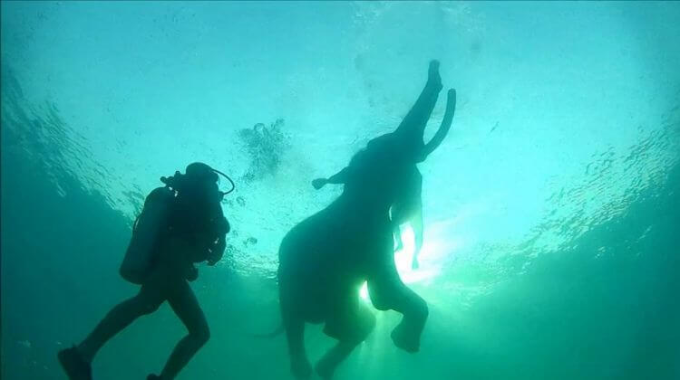 Swimming With Elephants Andaman