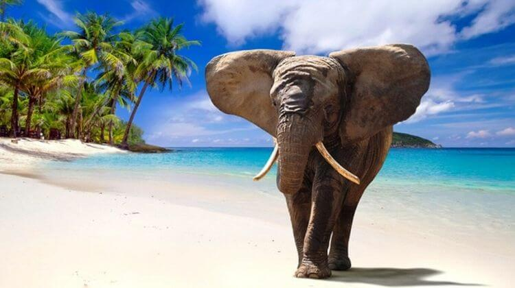 Swimming With Elephants in Andaman Reviews
